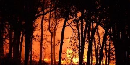 Bushfire resilience and bushfire behaviour