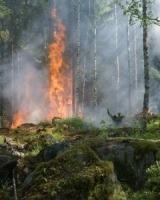 Measuring the economic impact of early bushfire detection